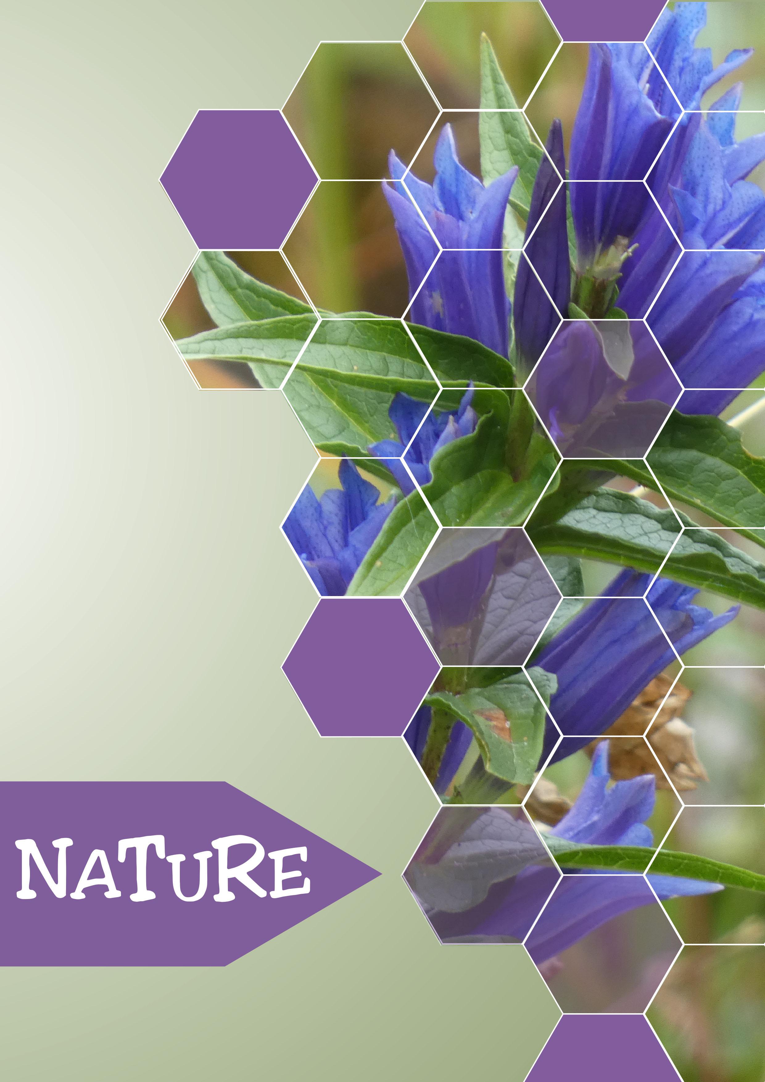 Création d'une affiche nature